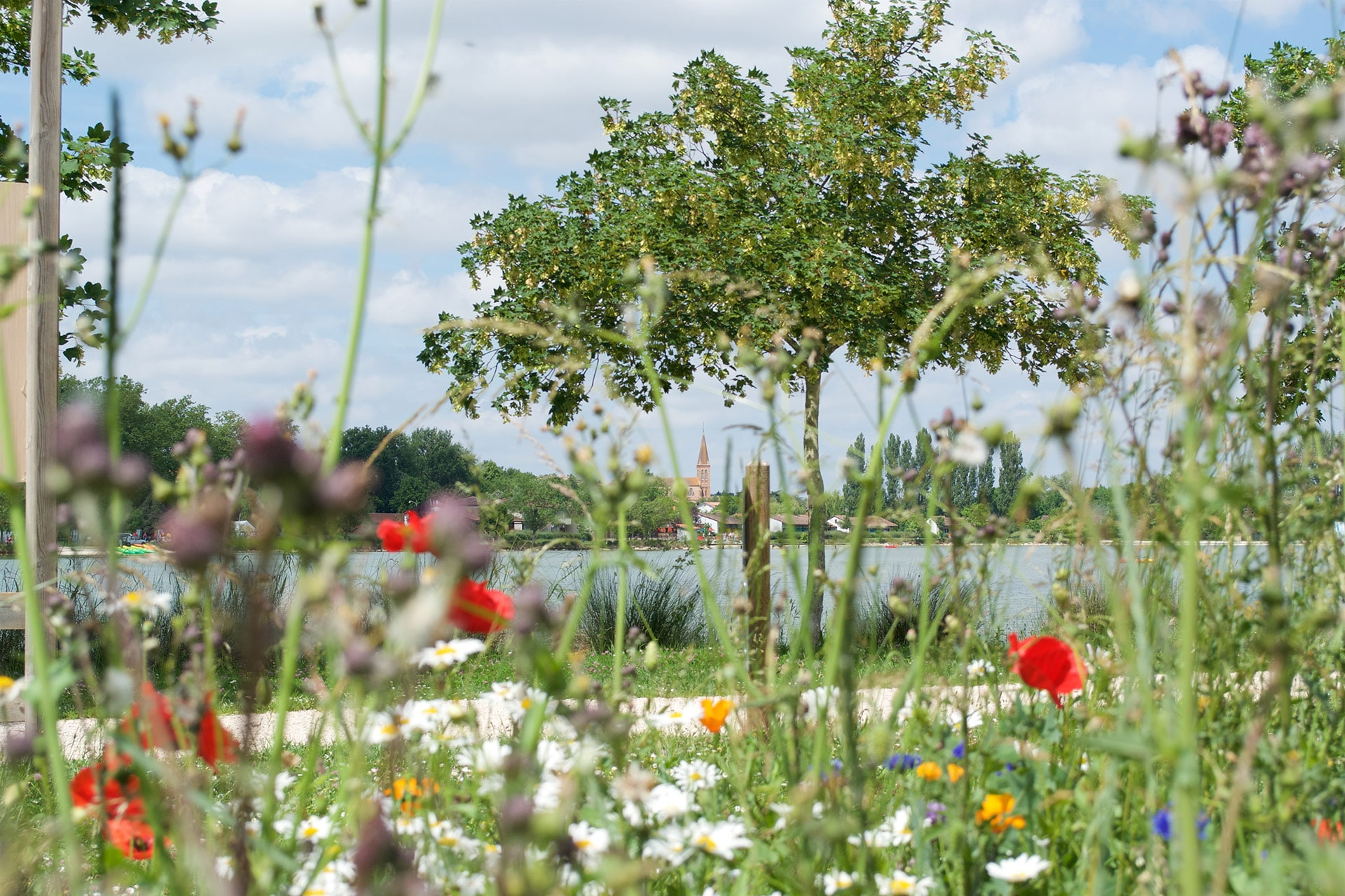 Lac de Samatan Gers allée bordée de fleurs