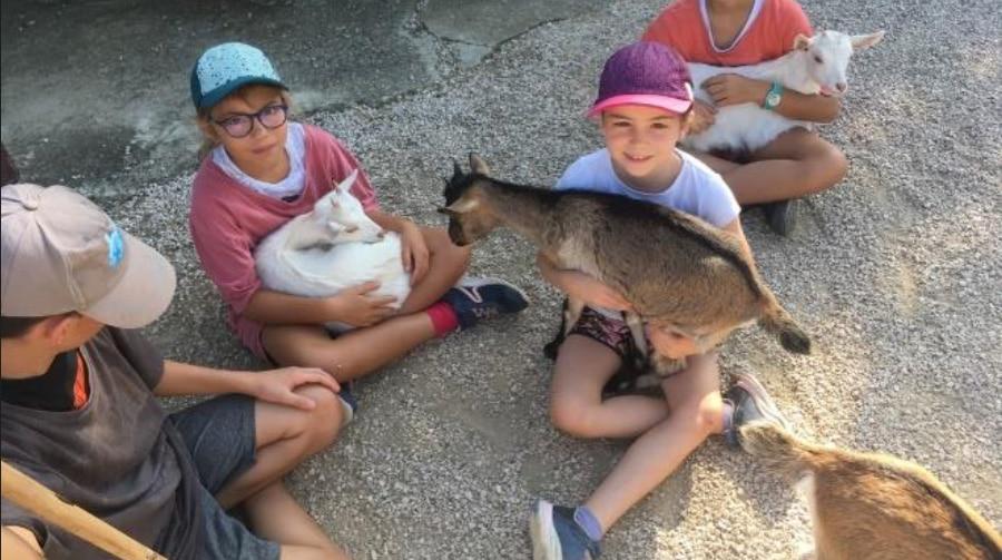 colonie enfants à la ferme - les enfants avec les chèvres