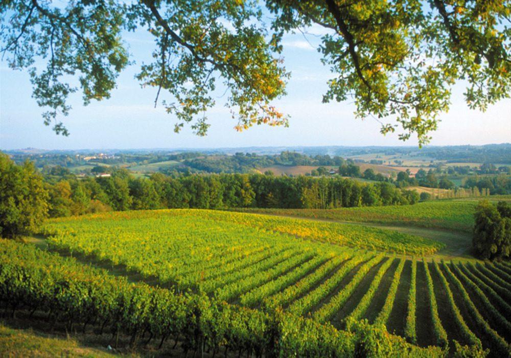 vignes-paysage-saint-mont-gers