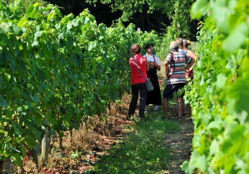 Visite commentée dans les vignes Saint-Mont Gers